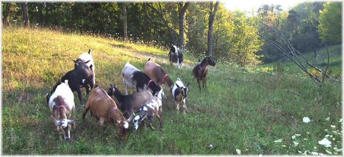Cloven Trail Farm - Cambridge, Ohio